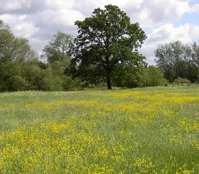The Hurst Water Meadow Trust